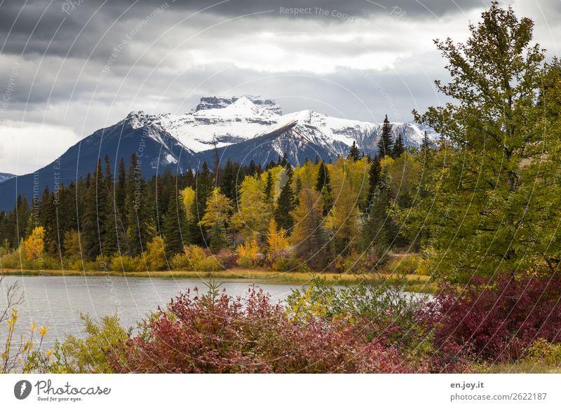 Autumn Vacation & Travel Mountain Nature Landscape Plant Clouds Tree Bushes Forest Hill Rocky Mountains Snowcapped peak Lakeside Vermilion Lakes Yellow Tourism