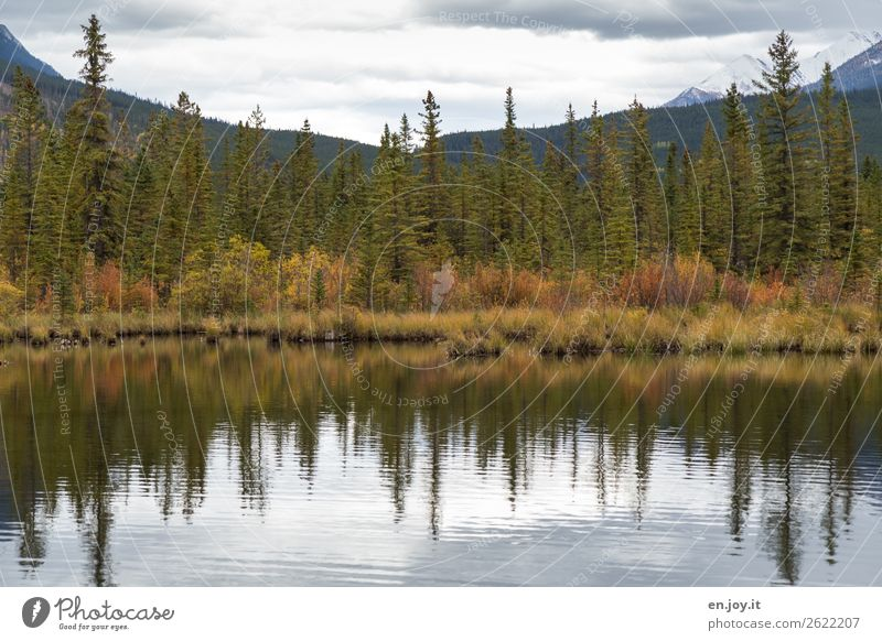 further left Vacation & Travel Trip Environment Nature Landscape Plant Clouds Autumn Grass Bushes Forest Mountain Lakeside Vermilion Lakes Wild Loneliness Idyll