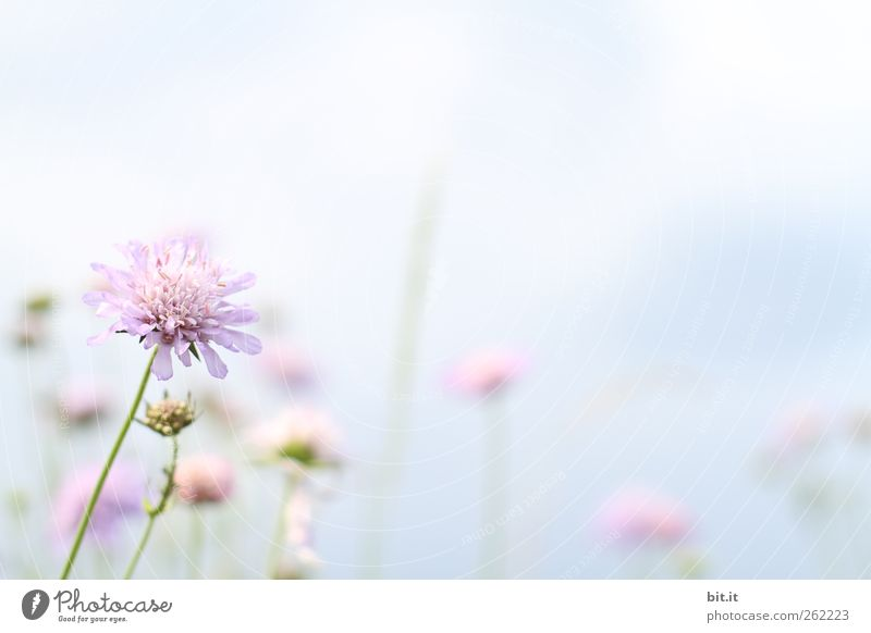 Sky Plant Summer Flower Relaxation Calm Blossom Spring Meadow Bright Pink Birthday Blossoming Joie de vivre (Vitality) Wedding Delicate
