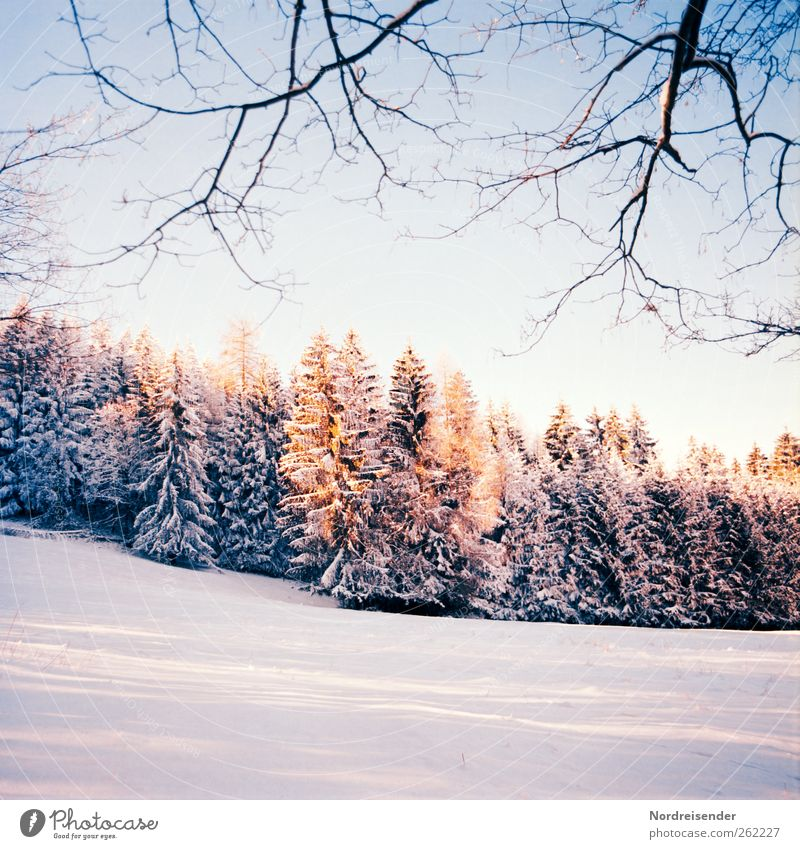 Late winter t III Senses Calm Winter Snow Winter vacation Christmas & Advent New Year's Eve Landscape Plant Cloudless sky Sun Climate Beautiful weather Field