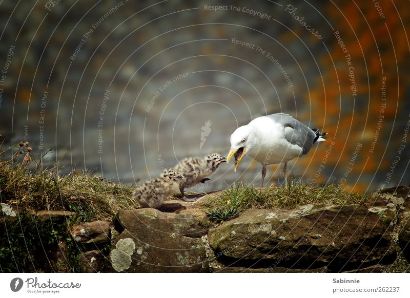 Nature White Animal Gray Small Baby animal Brown Bird Wild animal Group of animals Cute Seagull To feed Beak Feeding