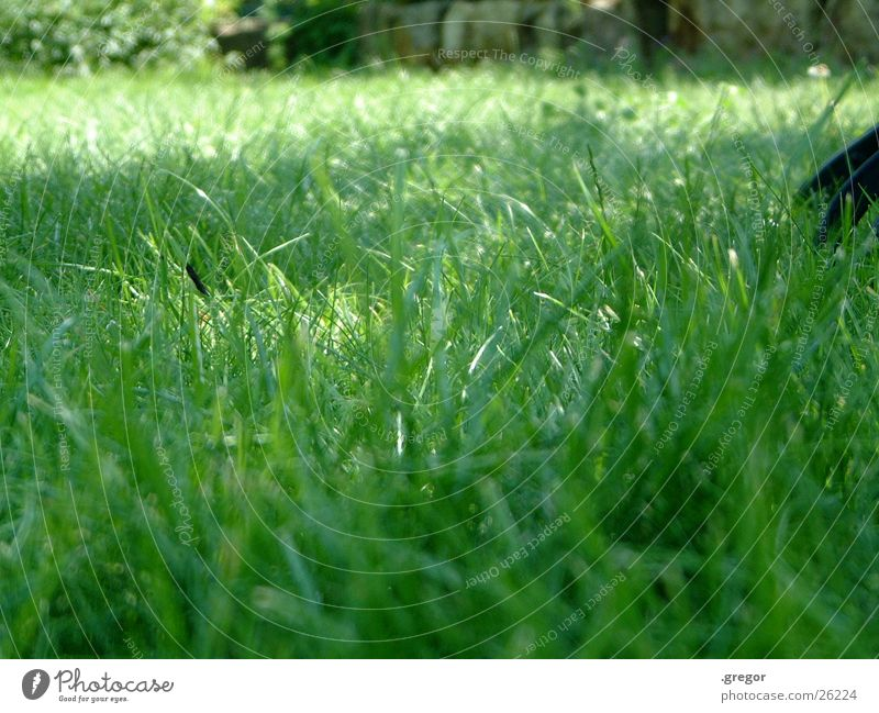 Green Summer Meadow Grass