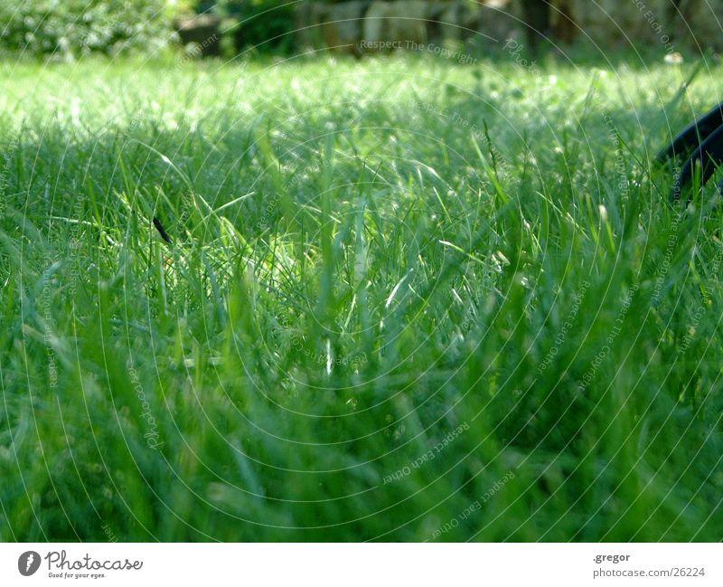Green Summer Meadow Grass