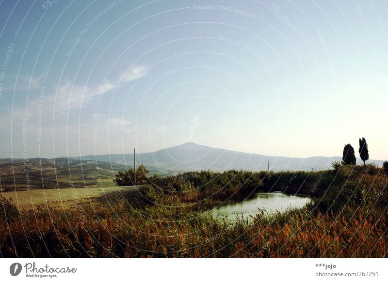 Oasis. Landscape Nature Tuscany Common Reed Pond Italy Mountain Hill Idyll Mediterranean Colour photo Exterior shot Deserted Copy Space top Neutral Background