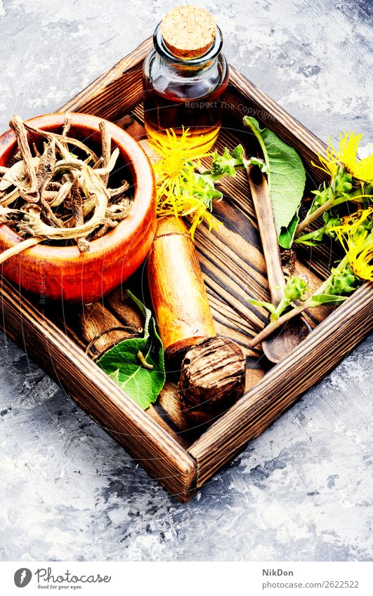 Root and tincture of elecampane inula plant medicine herbal healthy natural medicinal flower nature rhizomes treatment root dry homeopathic medical homeopathy