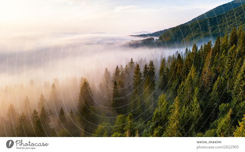 Fir forest in clouds of mist. Vacation & Travel Summer Mountain Environment Nature Landscape Clouds Sunrise Sunset Autumn Climate Beautiful weather Fog Tree