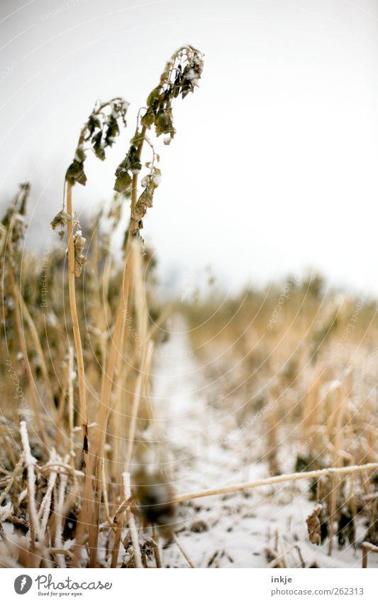 Sky Nature White Plant Winter Yellow Environment Landscape Cold Snow Emotions Grass Moody Ice Field Climate