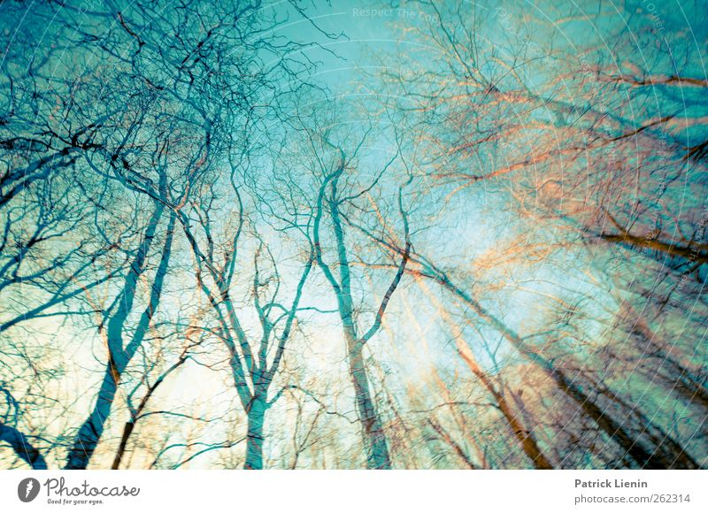 Sky Nature Blue Tree Plant Forest Environment Landscape Freedom Earth Air Dream Moody Weather Esthetic Elements