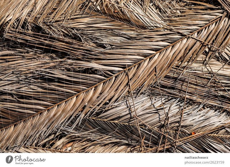 dry palm leaves Vacation & Travel Summer Environment Nature Plant Sun Warmth Drought Leaf Palm tree Palm frond Old Natural Dry Brown Grief