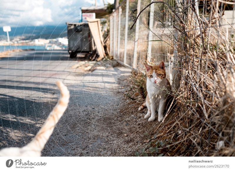 street cat Vacation & Travel Tourism Trip Summer Summer vacation Nature Landscape Animal Coast Lakeside Island Greece Crete Village Wall (barrier)