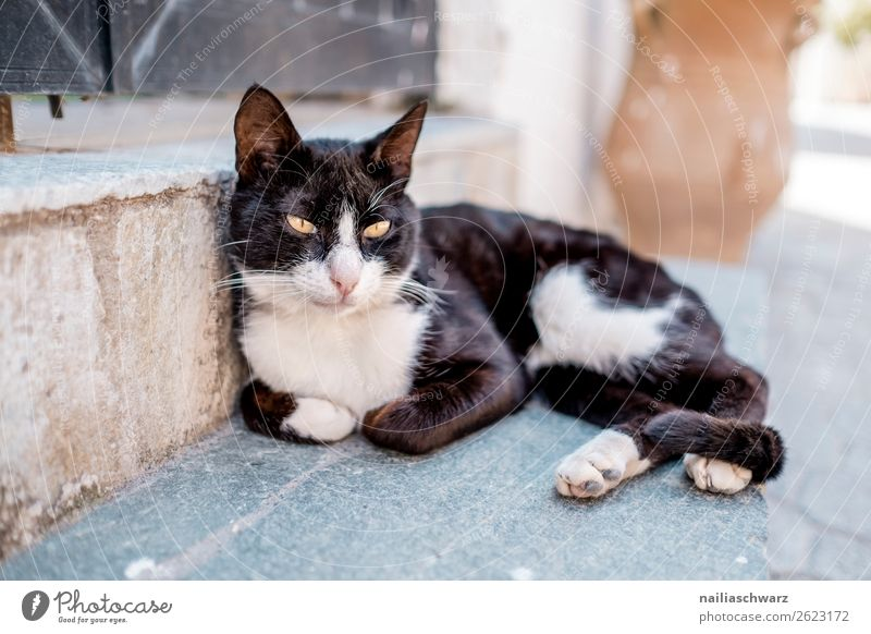 Strays on Crete Summer Animal Greece Village Deserted Wall (barrier) Wall (building) Facade Door Cat 1 Stone Observe Relaxation Looking Friendliness Natural