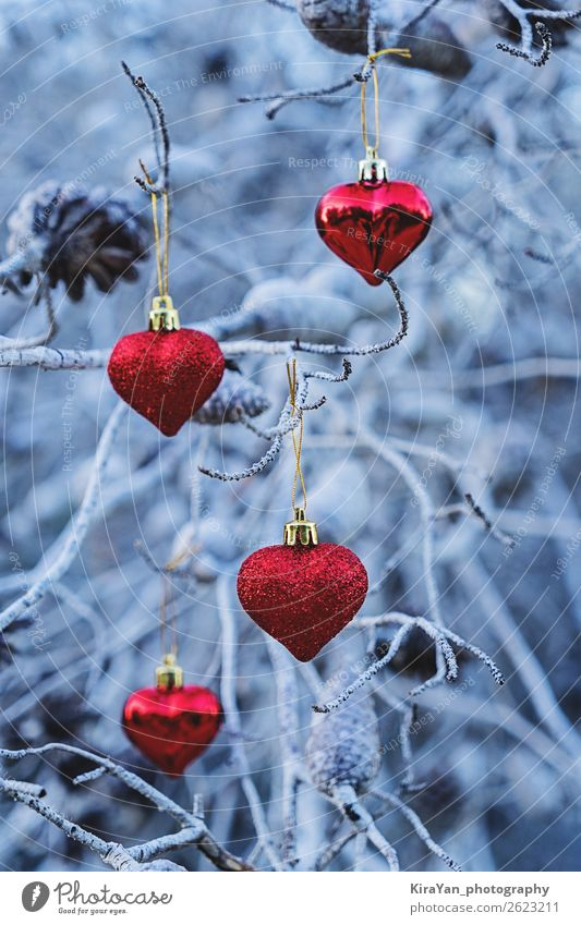 Red Christmas heart shaped balls on branches Christmas & Advent Blue Tree Winter Snow Feasts & Celebrations Copy Space Design Decoration Heart Gift