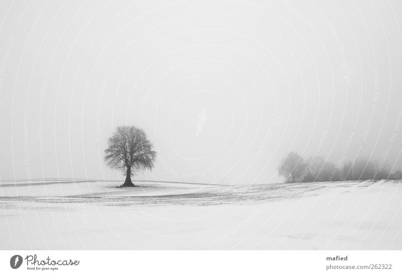 fade to grey Nature Landscape Plant Earth Sky Winter Weather Fog Ice Frost Snow Tree Field Gray Black White Loneliness Uniqueness Exterior shot Deserted