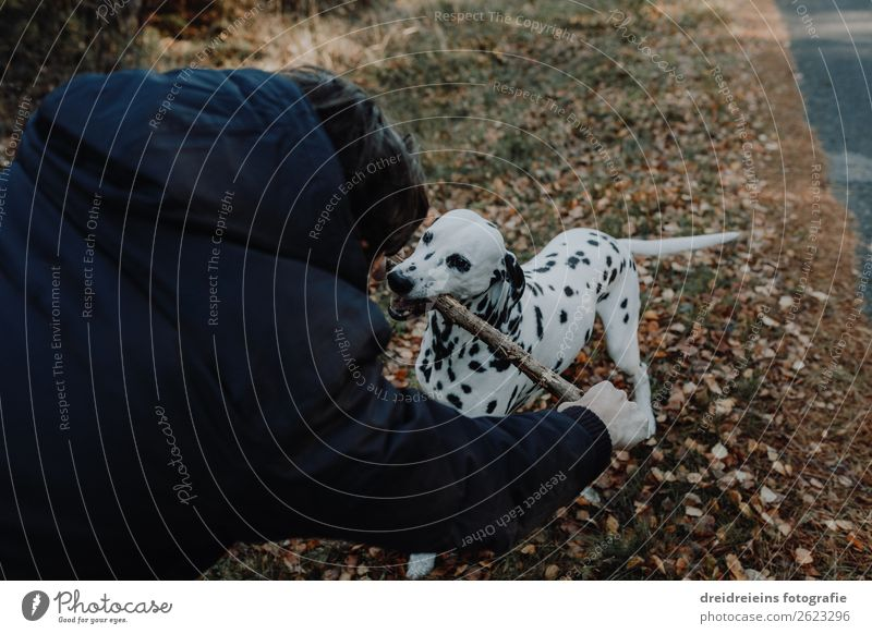 Dog Dalmatian stands in cornfield Joie de vivre (Vitality) play stick Central perspective Day Effortless fortunate Loyalty Dog and master Love of nature