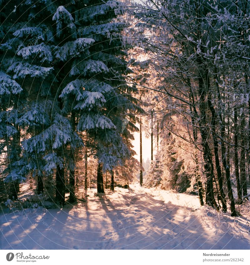 Nature Plant Winter Colour Calm Forest Relaxation Life Landscape Snow Lanes & trails Hiking Elements Friendliness Beautiful weather Footprint
