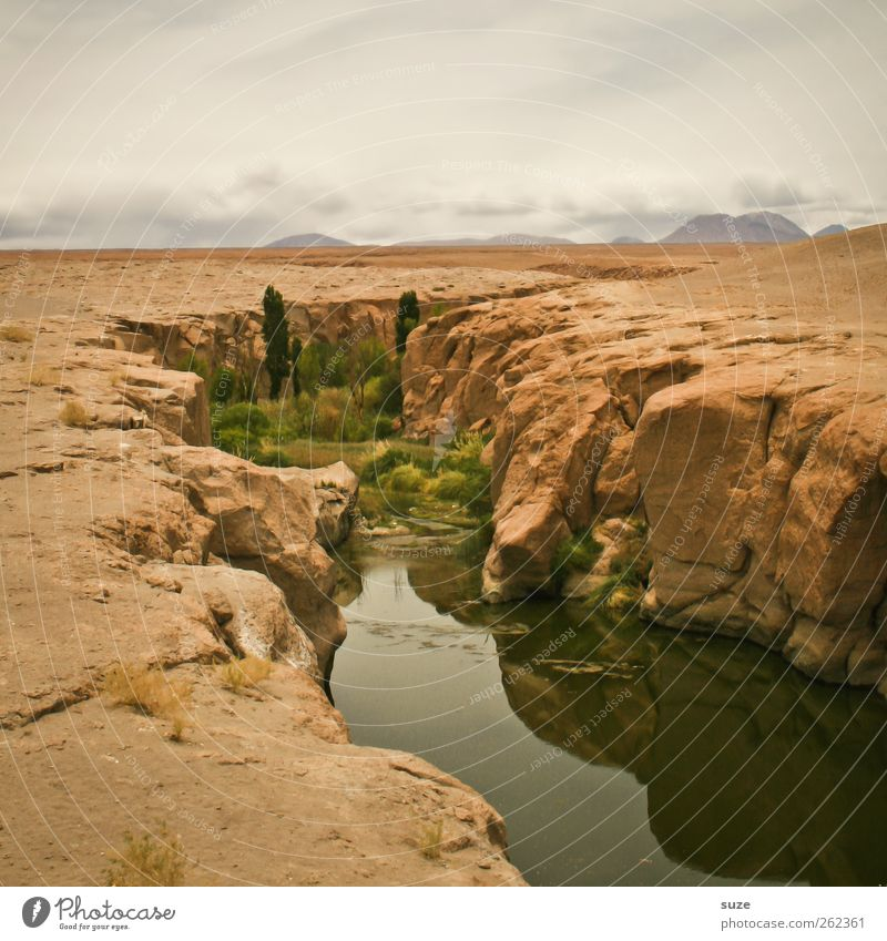small oasis Summer Environment Nature Landscape Elements Earth Sand Air Sky Horizon Climate Weather Beautiful weather Plant Rock River Desert Oasis Stone