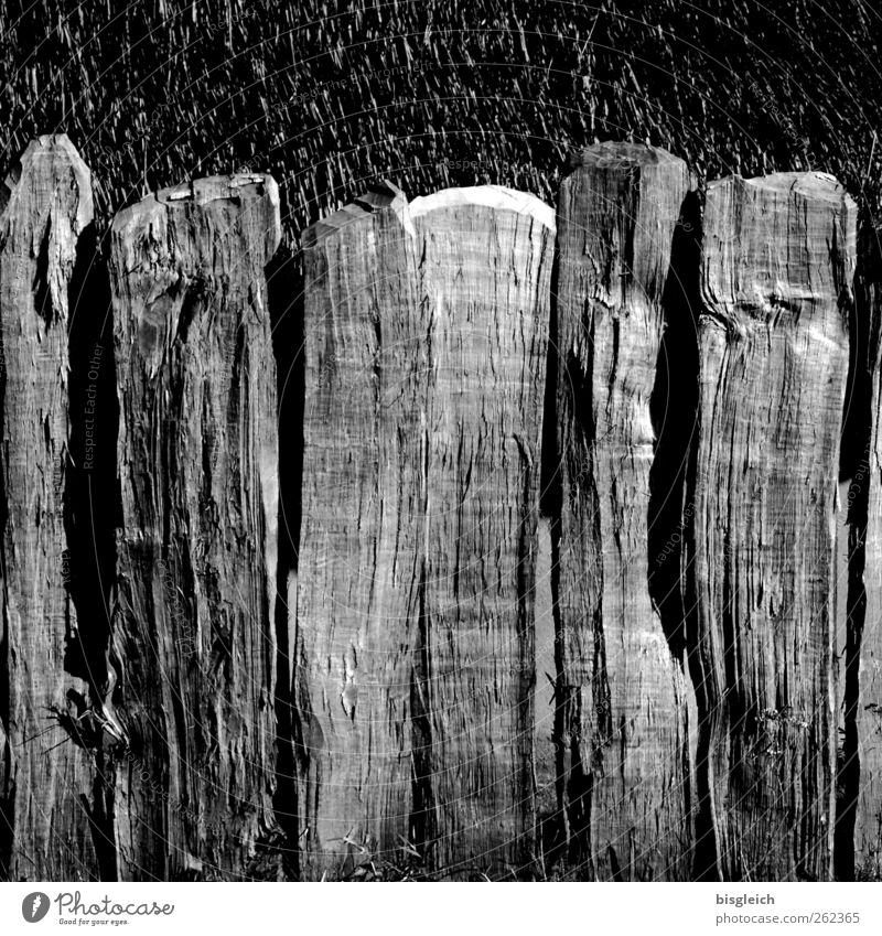 wooden fence Fence Wooden fence Old Gray Weathered Derelict Black & white photo Exterior shot Deserted Day