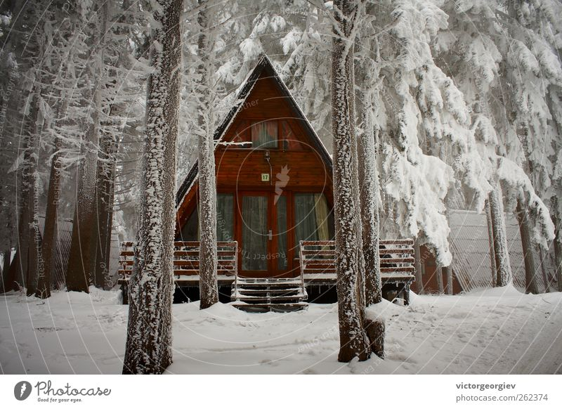 winter hut Nature Vacation & Travel White Tree Loneliness House (Residential Structure) Winter Forest Cold Mountain Snow Ice Tourism Protection Frost Safety