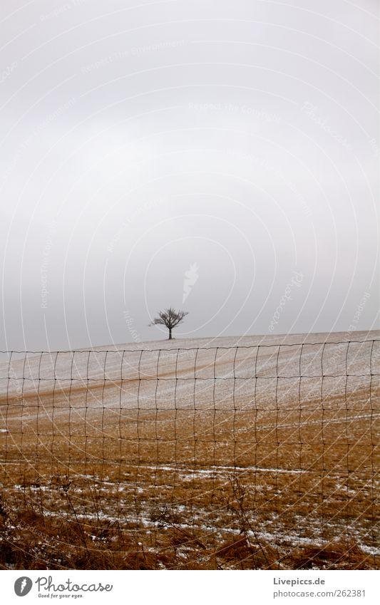 Nature Tree Plant Winter Yellow Environment Landscape Snow Gray Weather Field Fence