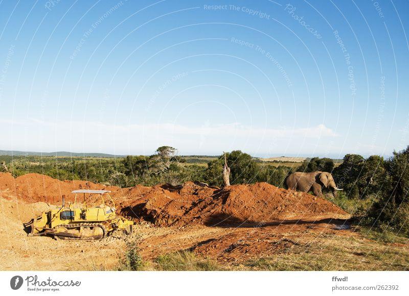 Planer & Animal Vacation & Travel Far-off places Safari Construction site Environment Nature Earth Sky Tree Grass Bushes Lanes & trails Excavator Bulldozer