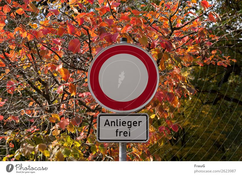 residents free Autumn Bushes Leaf Road sign Illuminate Multicoloured Bans exception mandatory character Light Autumnal colours Colour photo Exterior shot