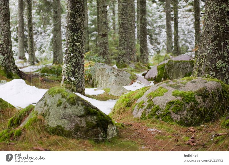Mossed stones in the Black Forest Vacation & Travel Tourism Trip Freedom Cycling tour Mountain Hiking Nature Landscape Plant Earth Autumn Winter Ice Frost Snow