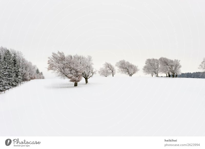 Snow-covered windbeech on Schauinsland Vacation & Travel Tourism Trip Adventure Far-off places Freedom Winter Winter vacation Mountain Hiking Nature Landscape