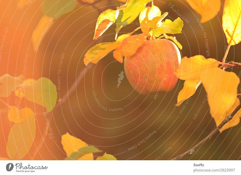 Nature Healthy Eating Beautiful Autumn Yellow Orange Brown Fruit Twig Organic produce Apple Vegetarian diet Diet Vegan diet Autumn leaves