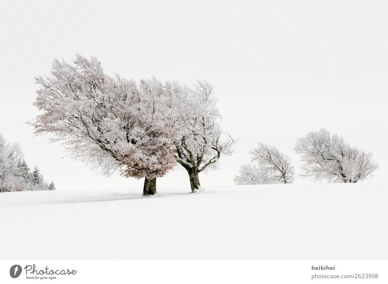 Sky Vacation & Travel Nature Plant Landscape Tree Relaxation Loneliness Forest Winter Far-off places Mountain Snow Tourism Freedom Trip
