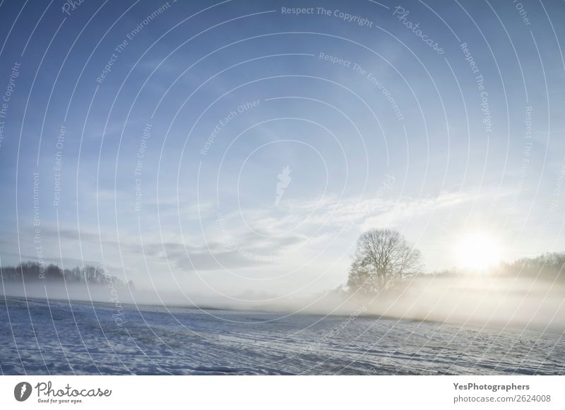Sunrise and mist over winter nature scenery Winter Snow Christmas & Advent Nature Landscape Weather Fog Tree Meadow Dream Bright Natural White Germany christmas