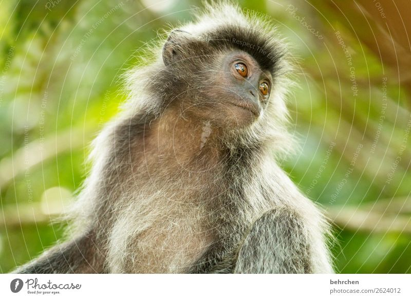 wistfully Vacation & Travel Tourism Trip Adventure Far-off places Freedom Nature Virgin forest Wild animal Animal face Pelt Monkeys bonnet langurs 1 Exceptional