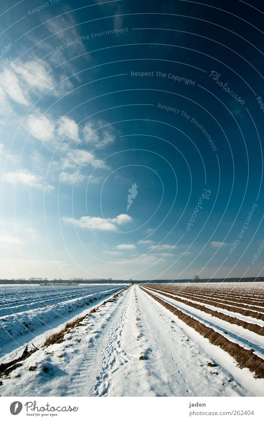 Sky Blue Winter Clouds Calm Far-off places Landscape Cold Snow Lanes & trails Horizon Earth Field Ground Infinity Row
