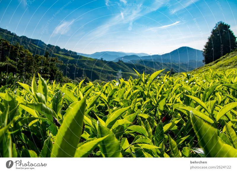 to warm up Vacation & Travel Tourism Trip Adventure Far-off places Freedom Nature Landscape Sky Plant Tree Leaf Agricultural crop Tea plants Tea plantation