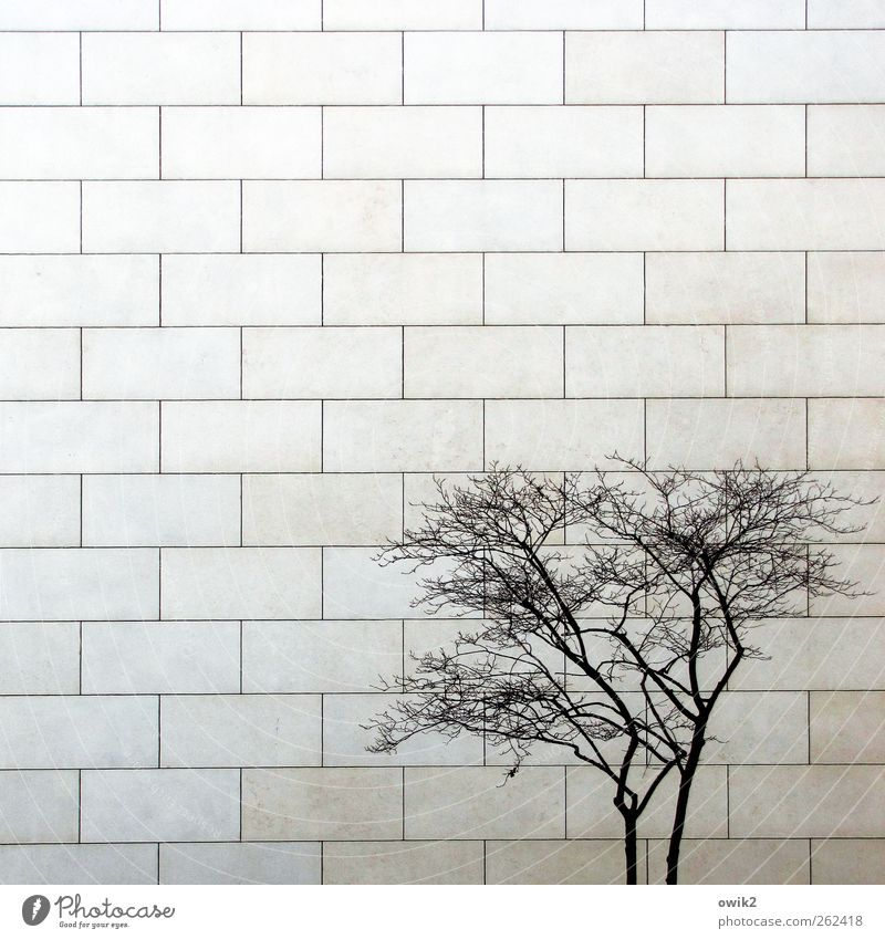 Blue City Tree Plant Winter Loneliness House (Residential Structure) Wall (building) Wood Gray Wall (barrier) Stone Bright Facade Authentic Growth
