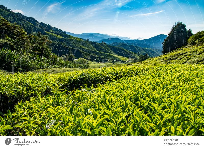 Sky Vacation & Travel Nature Plant Blue Green Landscape Tree Leaf Far-off places Mountain Tourism Exceptional Freedom Trip Field