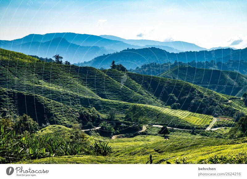 good-night tea Vacation & Travel Tourism Trip Adventure Far-off places Freedom Nature Landscape Sky Plant Tree Agricultural crop Tea plants Tea plantation Field
