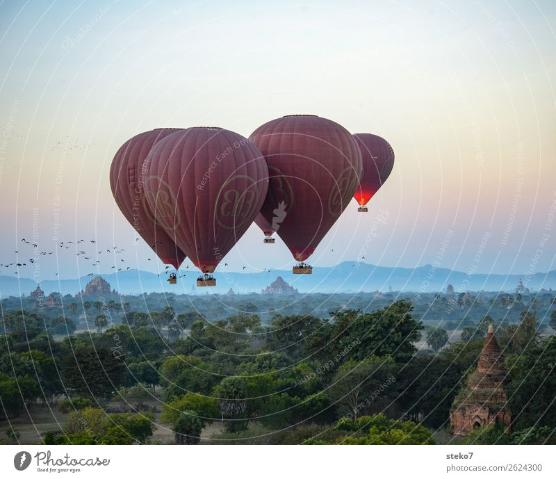 Birds and hot air balloons above Bagan Tourist Attraction Landmark Hot Air Balloon Driving Flying Exotic Vacation & Travel Tourism Dream Hover Flock of birds