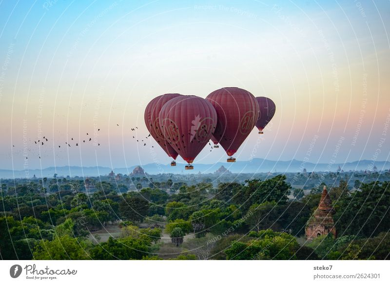 Flying over Bagan Ruin Building Tourist Attraction Pagoda Hot Air Balloon Bird Flock Driving Relaxation Freedom Ease Vacation & Travel Tourism Attachment Hover