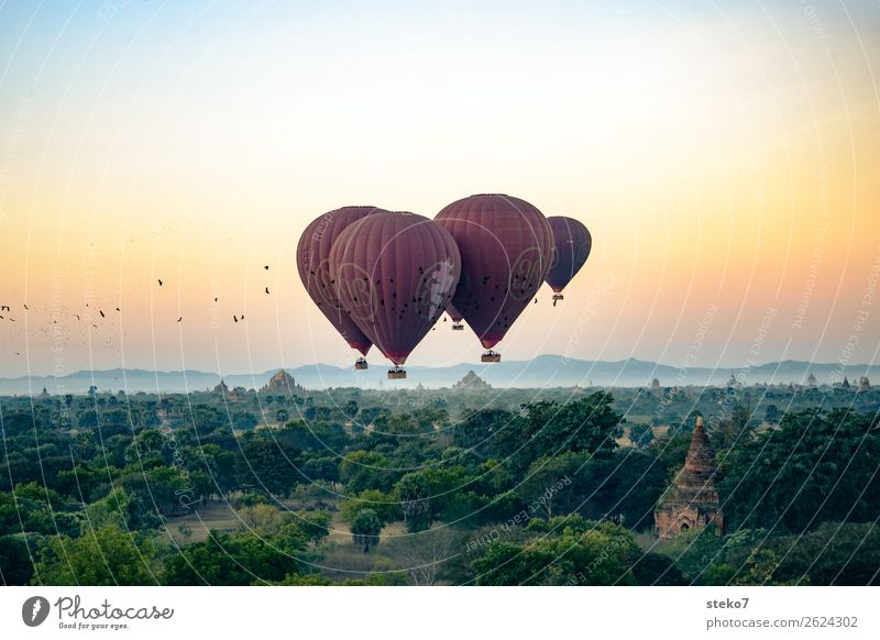 Birds versus balloons over Bagan Tourism Trip Adventure Freedom Sightseeing Myanmar Manmade structures Tourist Attraction Hot Air Balloon Driving Flying Horizon