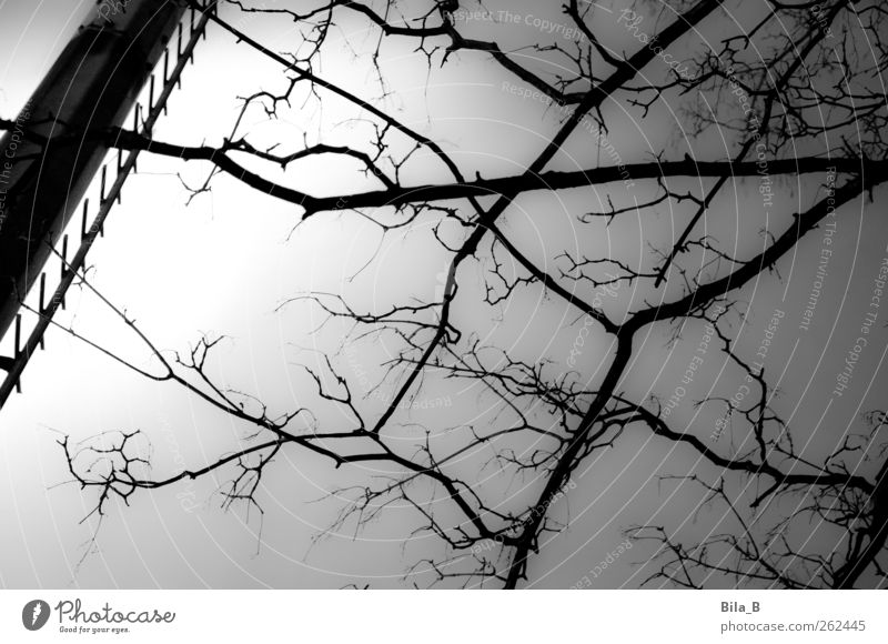 branches Nature Plant Tree Growth Dark Gray Black White Branch Twigs and branches Metalware Floodlight Ladder Light Black & white photo Exterior shot Night