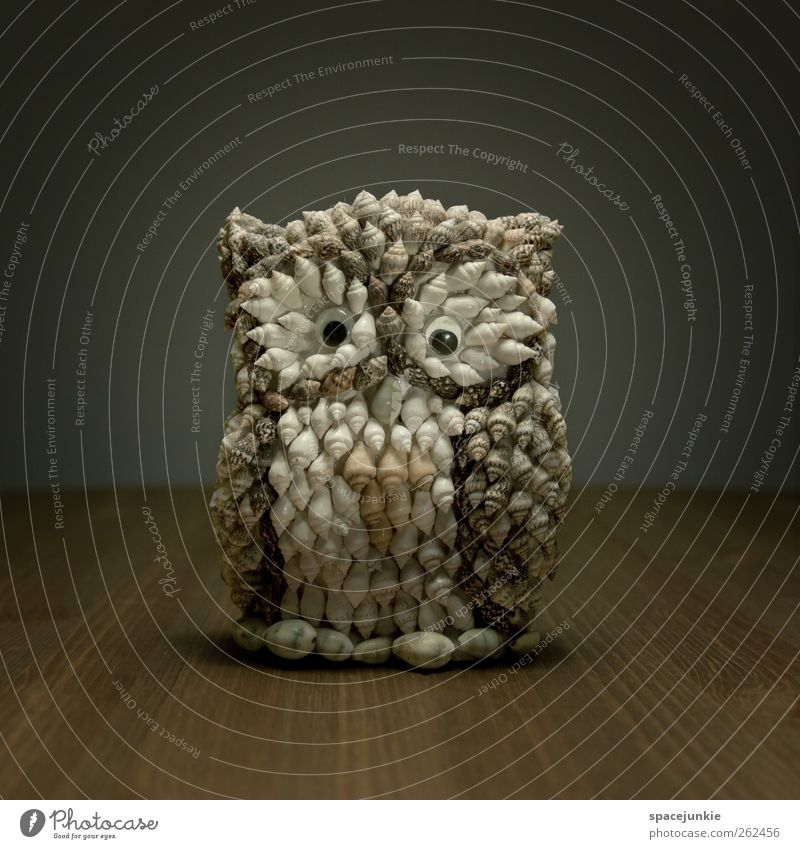 Funny Bird Exceptional Uniqueness Observe Kitsch Whimsical Figure Mussel Strange Humor Odds and ends Owl birds Eagle owl