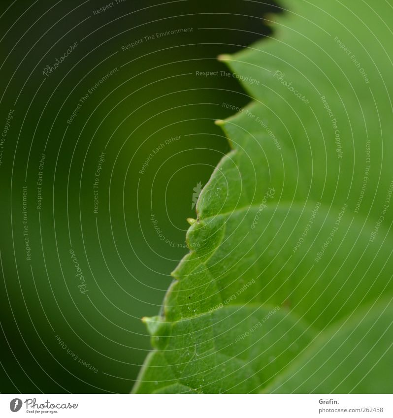 Green Plant Leaf Environment Spring Growth Change Thorny Spring fever Leaf green