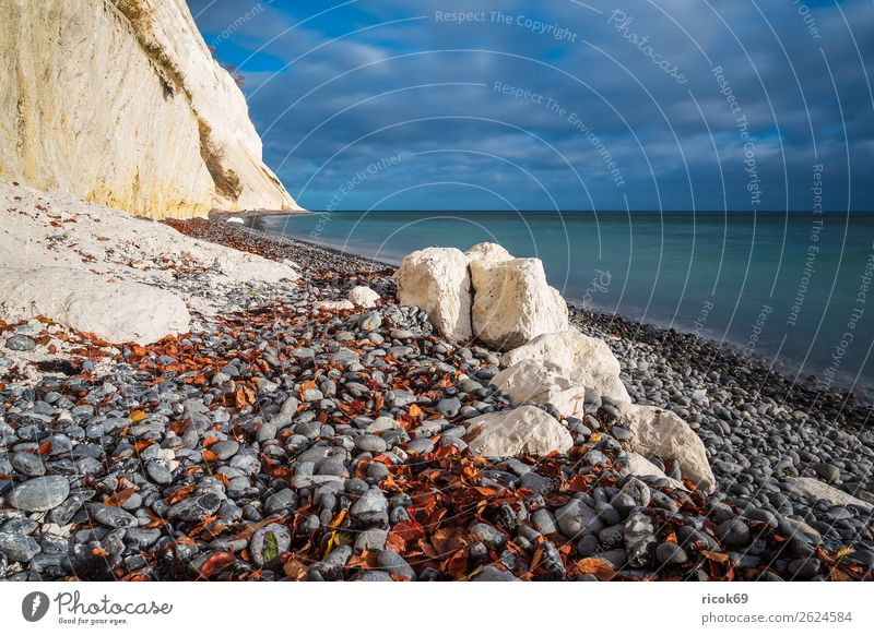 Baltic Sea coast on the island of Moen in Denmark Relaxation Vacation & Travel Tourism Beach Ocean Nature Landscape Water Clouds Autumn Tree Forest Rock Coast