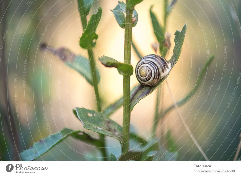 resting place Nature Plant Animal Autumn Beautiful weather Leaf Marguerite Garden Snail schnirkel snail 1 Snail shell Small Brown Yellow Gold Green Moody