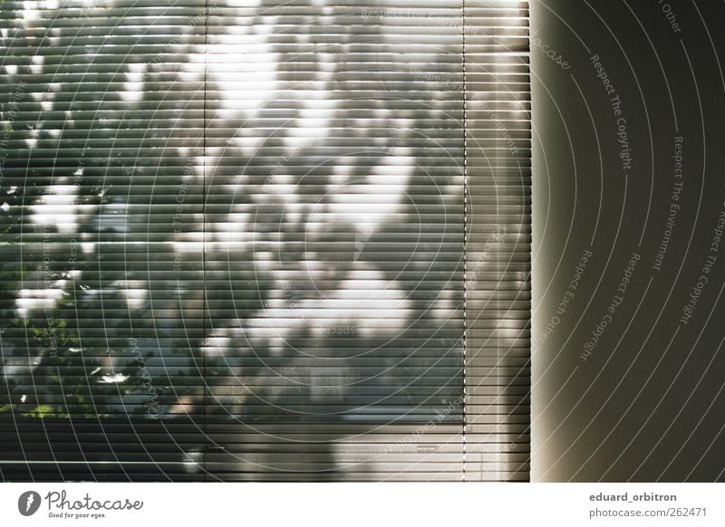 madness Window Esthetic Venetian blinds Tree Shadow Wall (building) Colour photo Interior shot Day Light