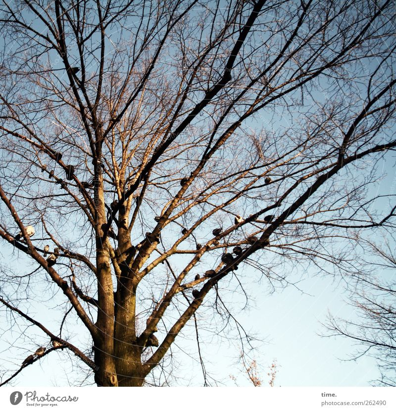 pigeon tree Environment Nature Plant Animal Winter Beautiful weather Tree Bird Pigeon Group of animals Relationship Society Break Calm Home country Relaxation