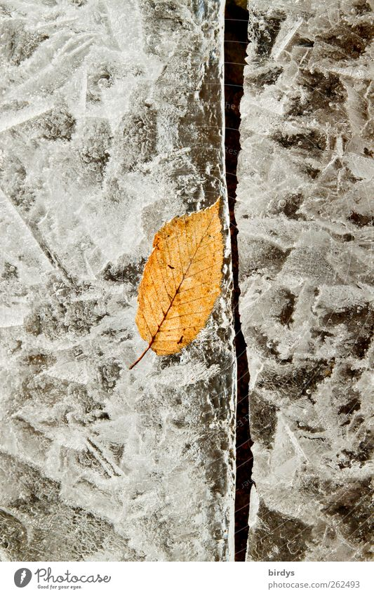 Preserved in ice cream Winter Climate Ice Frost Leaf Lake Freeze Esthetic Exceptional Beautiful Yellow Gray Cold Nature Change Column Autumn leaves 1