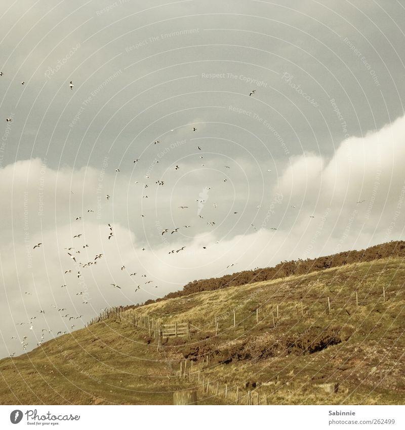 seagull pack Environment Nature Landscape Elements Earth Sky Clouds Grass Bushes Aberdeen Scotland Bird Seagull Gull birds Flock Flying Yellow Green Fence