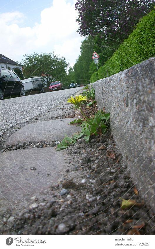 mauerBLÜMCHEN Flower Asphalt Gutter Human being Street Lanes & trails