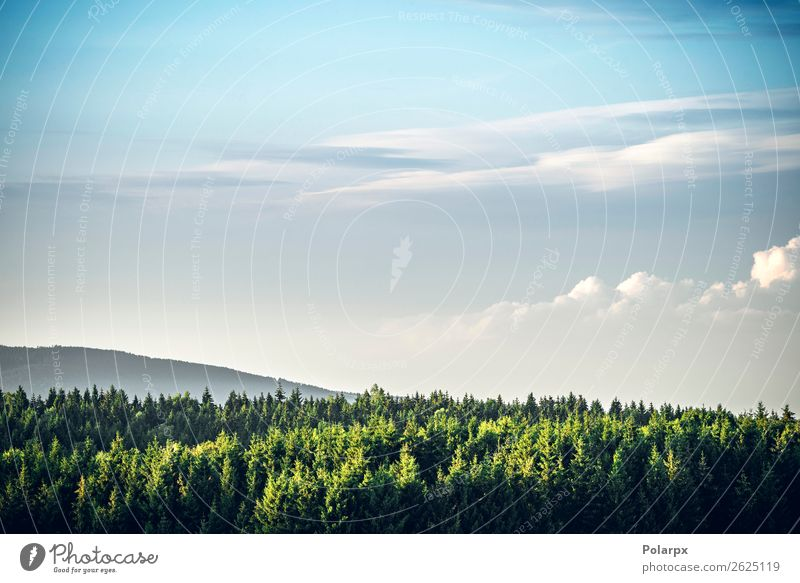 Tree tops in a pine tree forest Sky Vacation & Travel Nature Summer Blue Colour Beautiful Green Landscape Clouds Forest Mountain Environment Grass Tourism
